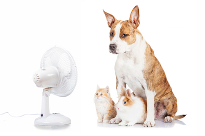 Beat the Heat with 12 Easy AC Tips for Summertime
