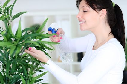 Indoor Air Purification: How Plants Can Detox Your Home