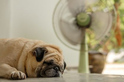 5 Reasons Why You Shouldn't Wait for Air Conditioning Repair